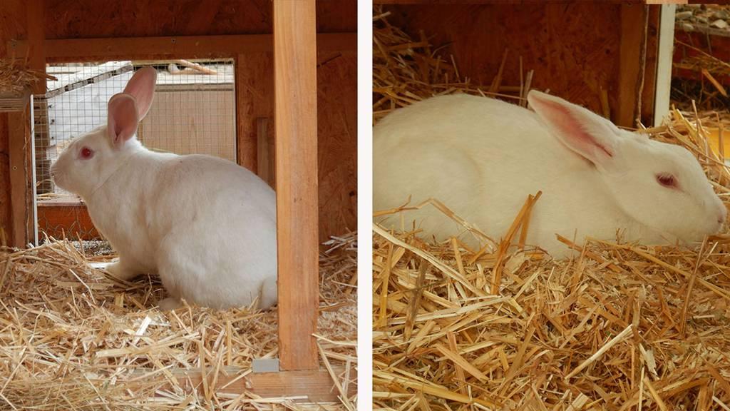 Kaninchen Olga & Ola