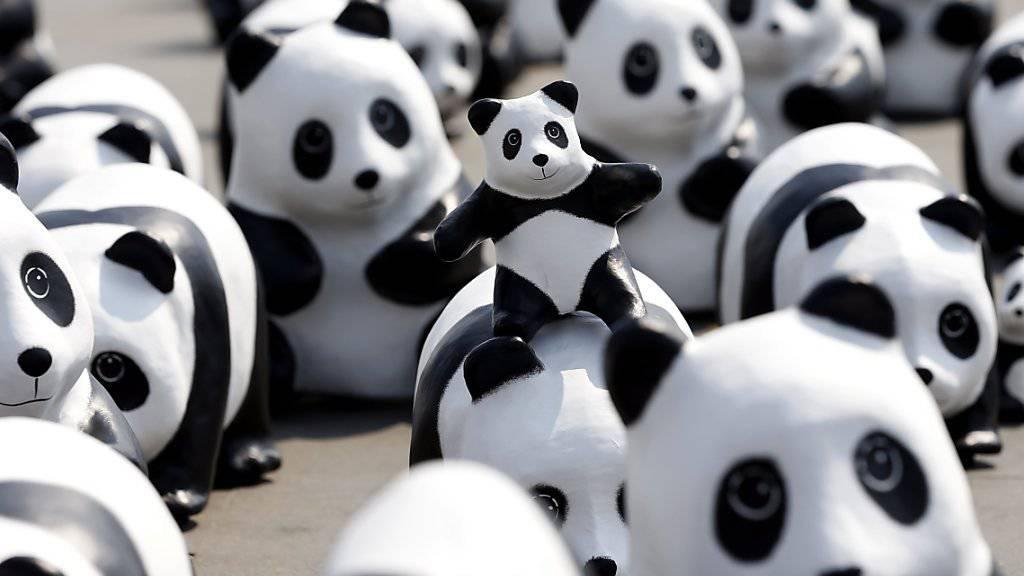 Einige der 1600 Papp-Pandas des Künstlers Paulo Grangeon, die am Freitag vor dem Grossen Palast in Bangkok aufgestellt worden sind.