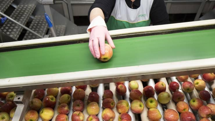 Lange bevor Obst in den Supermarkt kommt, müssen bereits angefaulte Früchte aussortiert werden. Ein Pflanzenhormon sorgt bei enger Lagerung für eine beschleunigte Reifung. (Symboldbild)