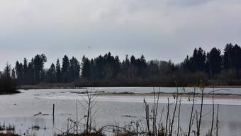 Die klirrende Kälte hat auch grosse Stücke des Flachsees zufrieren lassen. Trotz der tiefen Temperaturen kann man zwischen den kahlen Pflanzen verschiedene Vogelarten bei ihrem winterlichen Treiben beobachten.