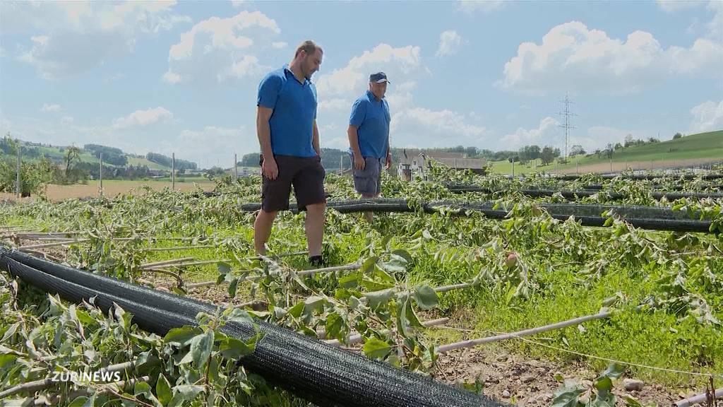 Erst Sturm, dann Hagel: Obstbauer aus Aesch ZH verliert fast gesamte Ernte