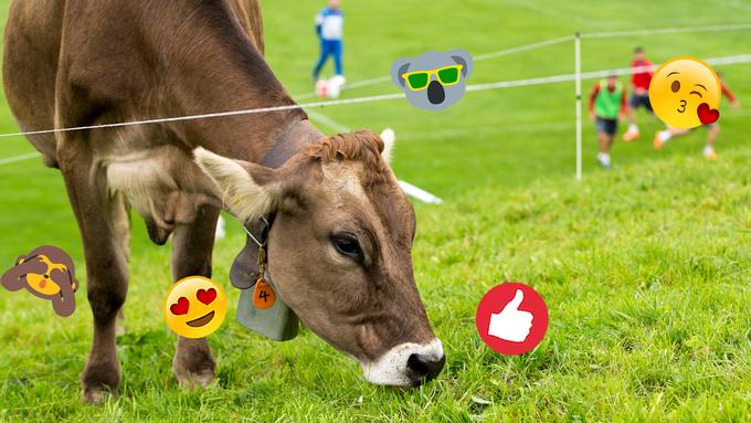 Neue Studie zeigt: Astronautennahrung für Kühe könnte der Umwelt helfen