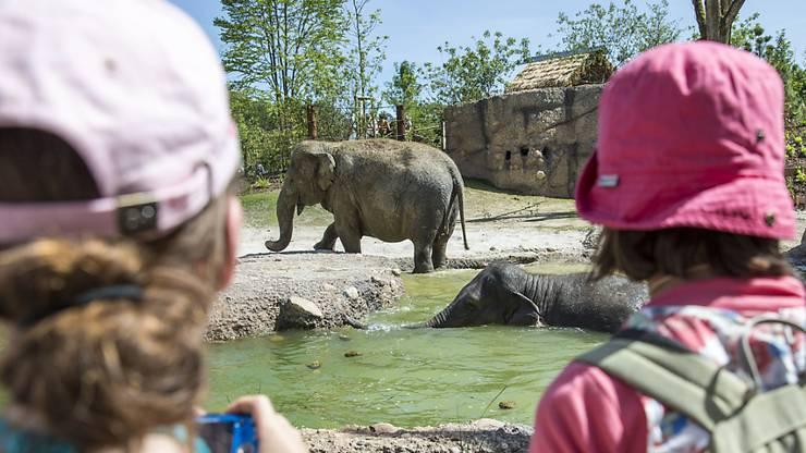 Der Zoo Zürich zählt pro Jahr mehr als eine Million Besucherinnen und Besucher.