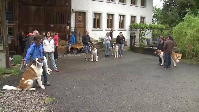 Aus dem Tierheim des Berner Tierschutzes in Oberbottigen BE