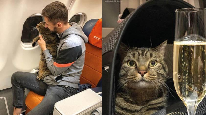 Katzebesitzer trickst wegen zu dicker Katze Airline aus