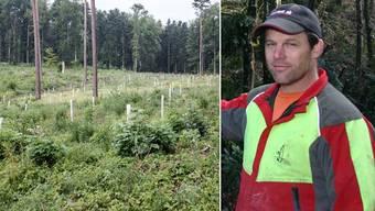 Der geschwächte Nadelholzbestand wurde gefällt, dafür sind seltene und wertvolle Baumarten angepflanzt und mit Hüllen vor Wildfrass geschützt worden.