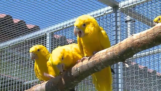 Ein Rundgang im neuen Vogelpark: Die Sendung «Tierisch» hat den bunten Vögeln bereits einen Besuch abgestattet.