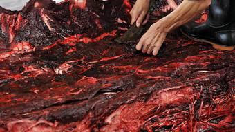 Japan hat wieder über 100 Wale getötet. (Archivbild)