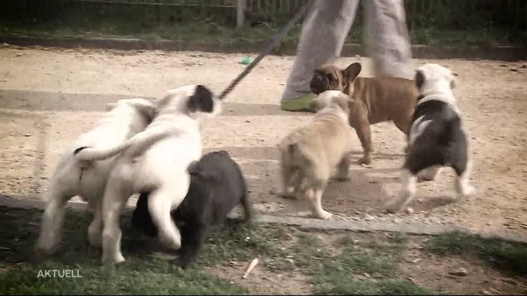 Leutwiler Züchterin muss Hunde definitiv weggeben