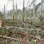 Am 26. Dezember 1999 wütete der Orkan «Lothar» in der Schweiz.