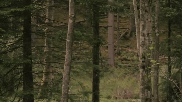 Waldberufe: Der Forstwart