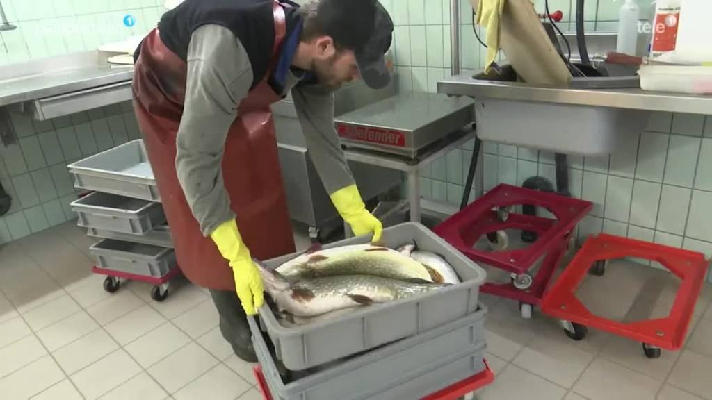 Nils Hofer Berufsfischer