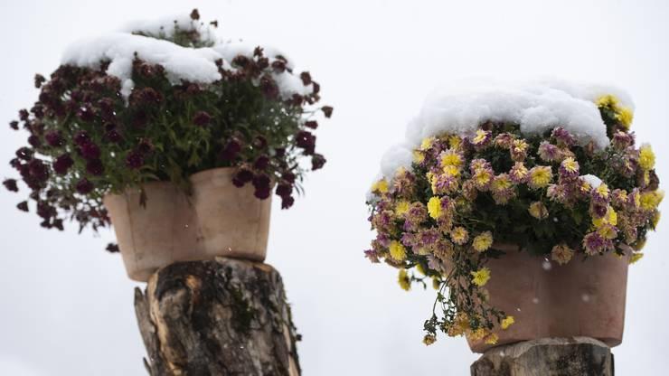 Schneelandschaft in Adelboden (BE)