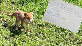 Schüler sammeln Unterschriften für die Klingnauer Fuchsfamilie.