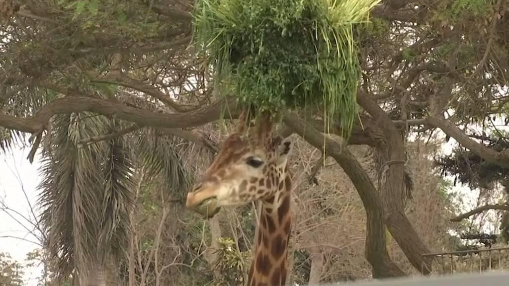 Tonnenschwere Futterspende an krisengeplagten Zoo