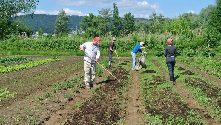 Für die Teilnahme an zehn Aktionstagen erhalten die Genossenschafter im Rahmen eines Abonnements wöchentlich eine Ration frisches Gemüse.