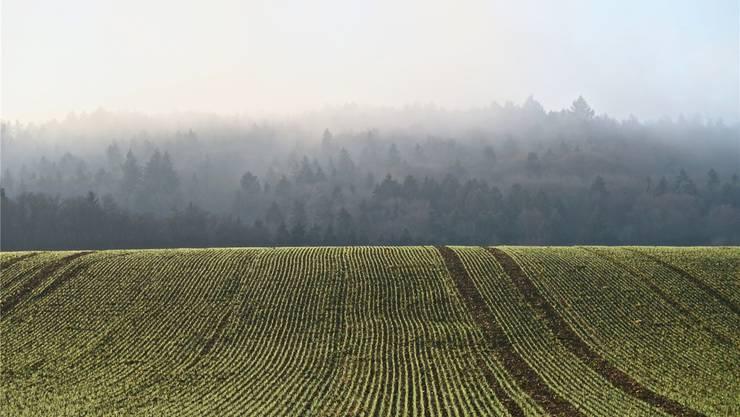 Die Kulturlandschaftsinitiative will die landwirtschaftlichen und ökologischen Flächen im Kanton Zürich schützen (Archiv)