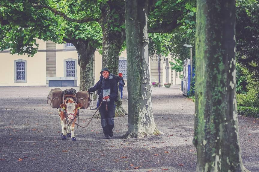 Gaëtan Dubler und Ochse Léo bei der Ankunft in Rorschach. Copyright: Raphael Rohner