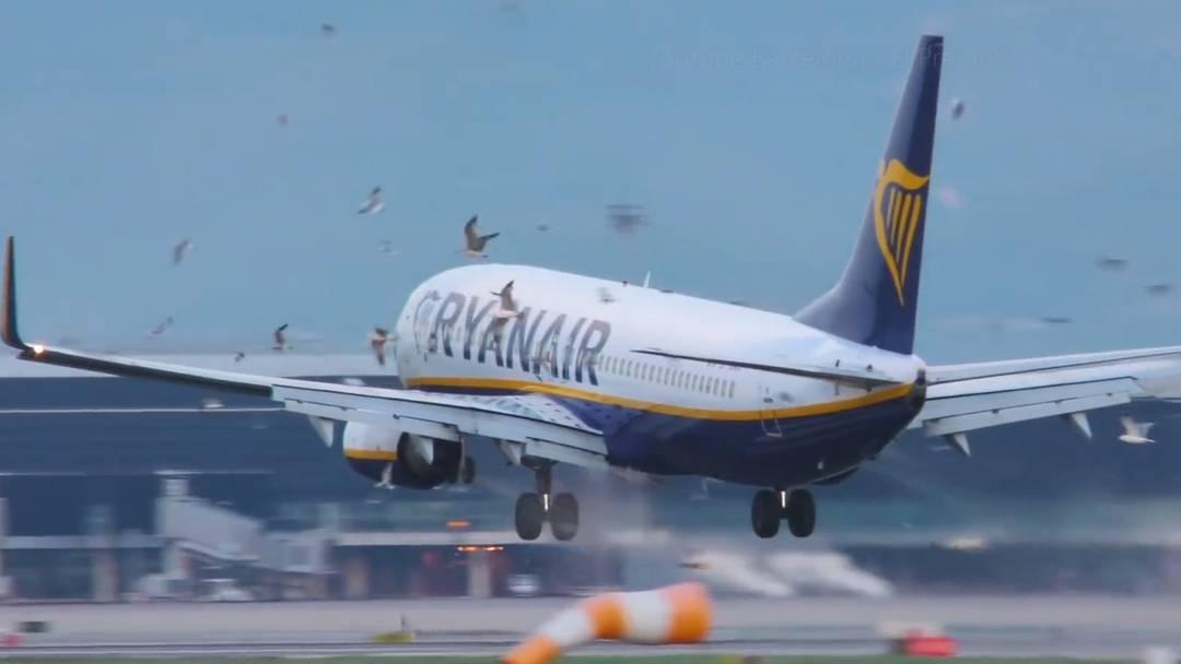 Hier gerät ein Flugzeug in einen Möwenschwarm