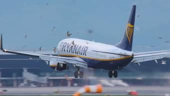 Ein Flugzeug fliegt bei der Landung in Barcelona in einen Möwenschwarm. Mehrere Tiere sterben.