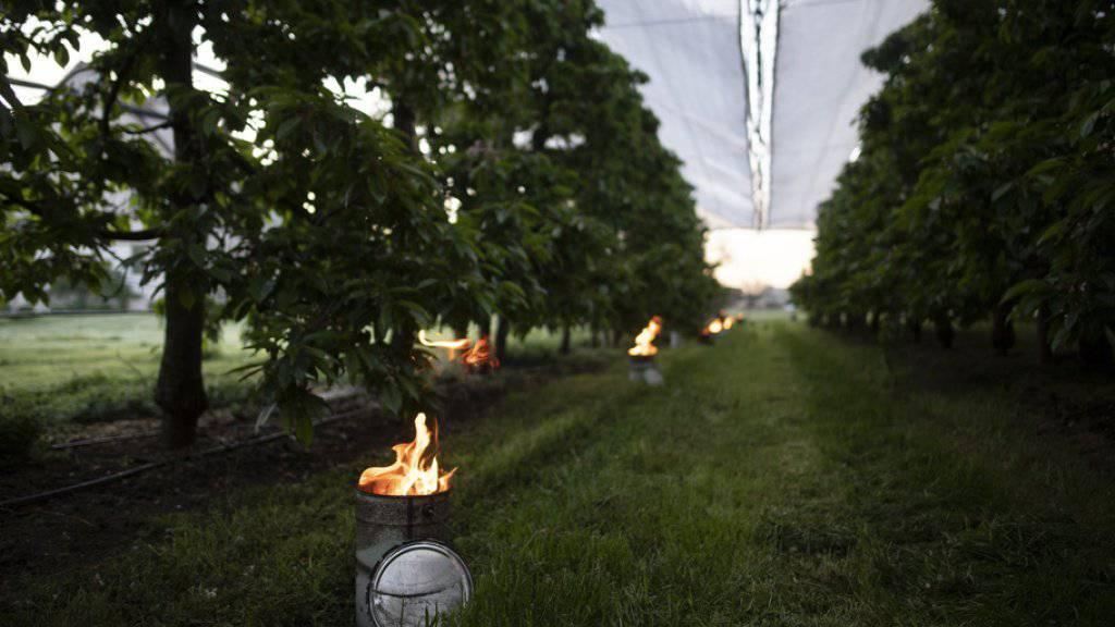 Brennende Frostkerzen in der Kirschenplantage der Familie Bär, aufgenommen am Dienstag in Opfershofen im Kanton Thurgau. Die vergangenen Nächte brachten für die Jahreszeit ungewöhnlich tiefe Temperaturen und gefährdeten damit die Ernte von Bauern.