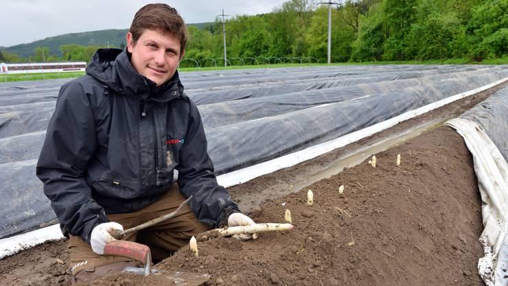 Gemüsebauer Roman Grob mit Messer und Kelle bei der Ernte der Bleichspargeln auf seinem Feld beim Giessenhof in Winznau