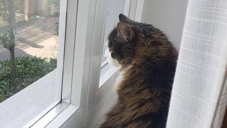 Katzen können stundenlang aus dem Fenster schauen. (Symbolbild)