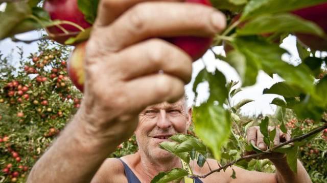 Zupacken und zubeissen: Äpfel sind heuer besonder süss (Archiv)