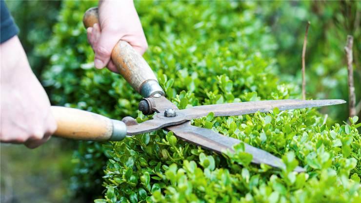 Gemeinden können Hecken oder Bäume, die für das Ortsbild wichtig sind, schützen.
