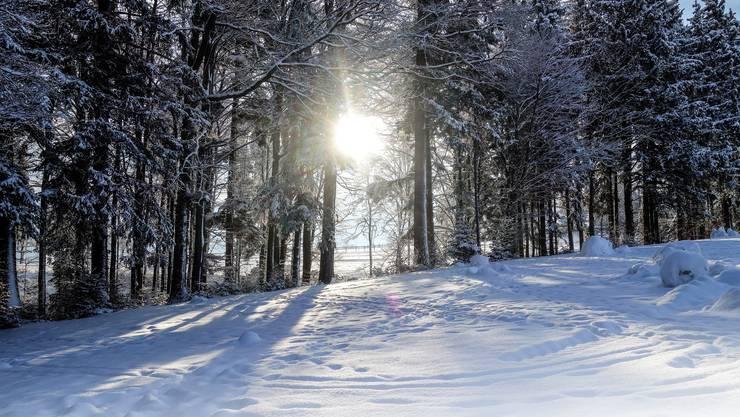 Der Lindenberg lockte überall zu einem SchneeSpaziergang.
