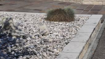 Andreas Glarner wäre ein Steingarten, keine Blumenwiese, findet Martina Rutschmann.