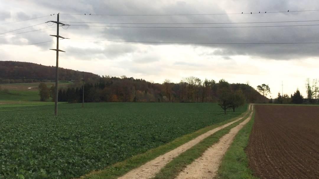 Ein Rundumblick über die Klingnauer Hochebene Hard/Härdli, wo die Kiesgrube entstehen soll