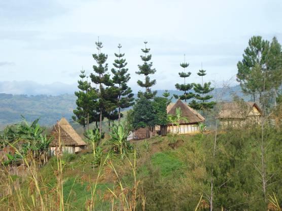 Die meisten Menschen in Papua Neuguinea leben in ruralen Gebieten und nach wie vor in Häusern aus Bambus und Kunaigras.