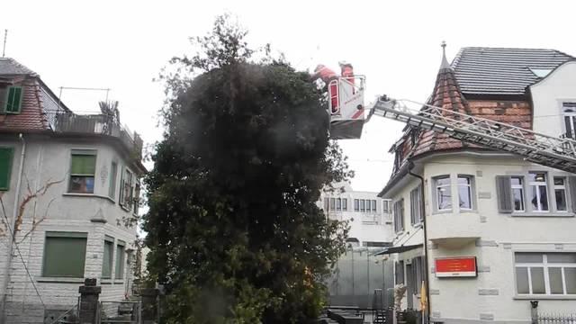 Die Feuerwehr Dietikon entfernt den Baum von der Fahrleitung 1