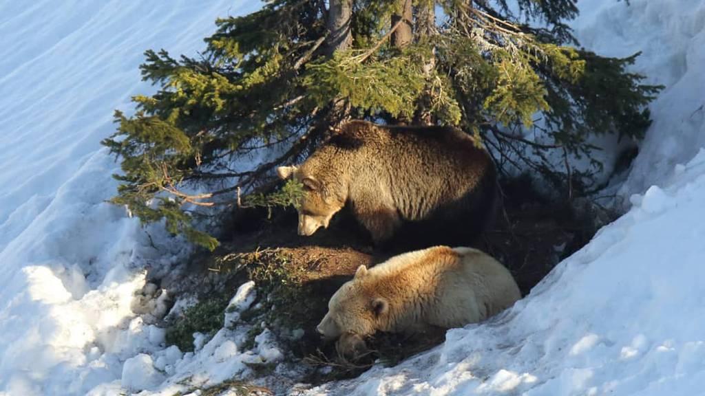 Napa und Amelia sind aus der Winterruhe erwacht