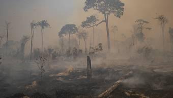 Rauch steigt während eines Brandes im Amazonas-Gebiet in Brasilien auf. Foto: Andre Penner/AP/dpa