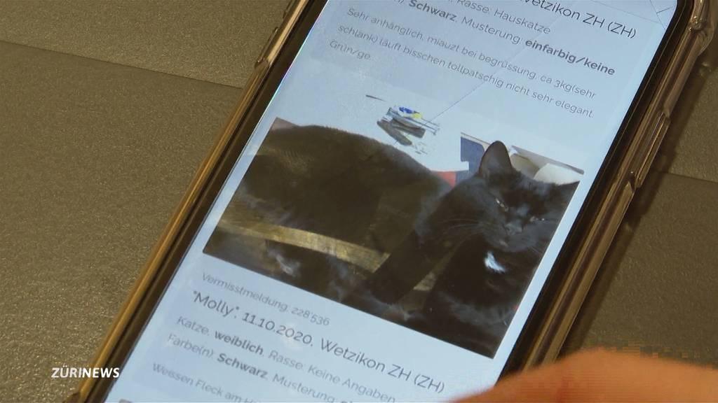 Wetzikon: Schon acht schwarze Katzen verschwunden