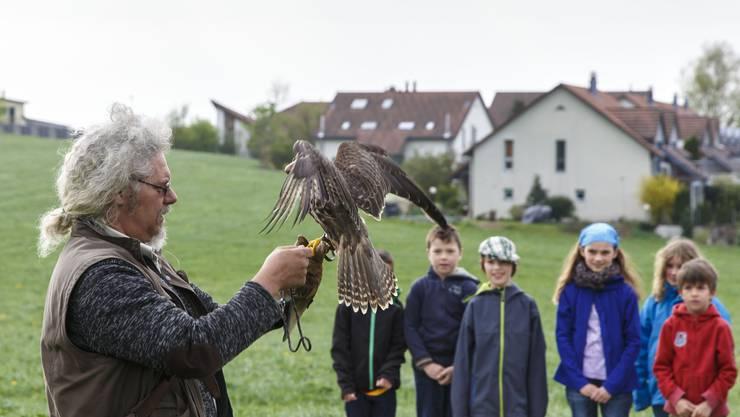 Falkner Urs Lüth stellt die verschiedenen Greifvögel vor