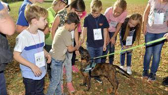 Mit dem Ferienpass auf Besuch bei der Polizei: Der erst 12 Wochen alte Kenai wird schon bald mit der Ausbildung zum Polizeihund beginnen.