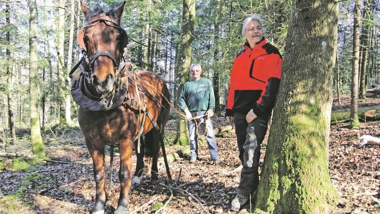 Landwirt Ernst Kleiber und Pferd Franz helfen Revierförster Urs Gsell (r.) bei der Holzernte im Hirschthaler Wald. ces
