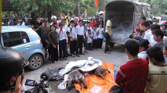 Kein Einzelfall: Bereits 2009 wurden in Hanoi zwei gefrorene Tiger gefunden (Archiv)