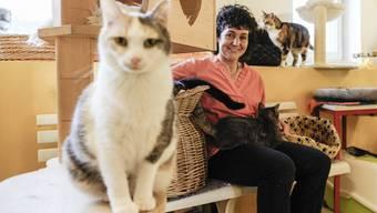 Yvonne Frey und das Katzenheim in Muttenz.