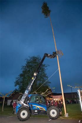 Das Aufstellen der 23 Meter hohen Maitanne erforderte die volle Konzentration.
