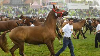 Hufe, Schweife, Halftern überall: Rund 400 Pferde nahmen an der Parade am traditionellen Marché-Concours teil.