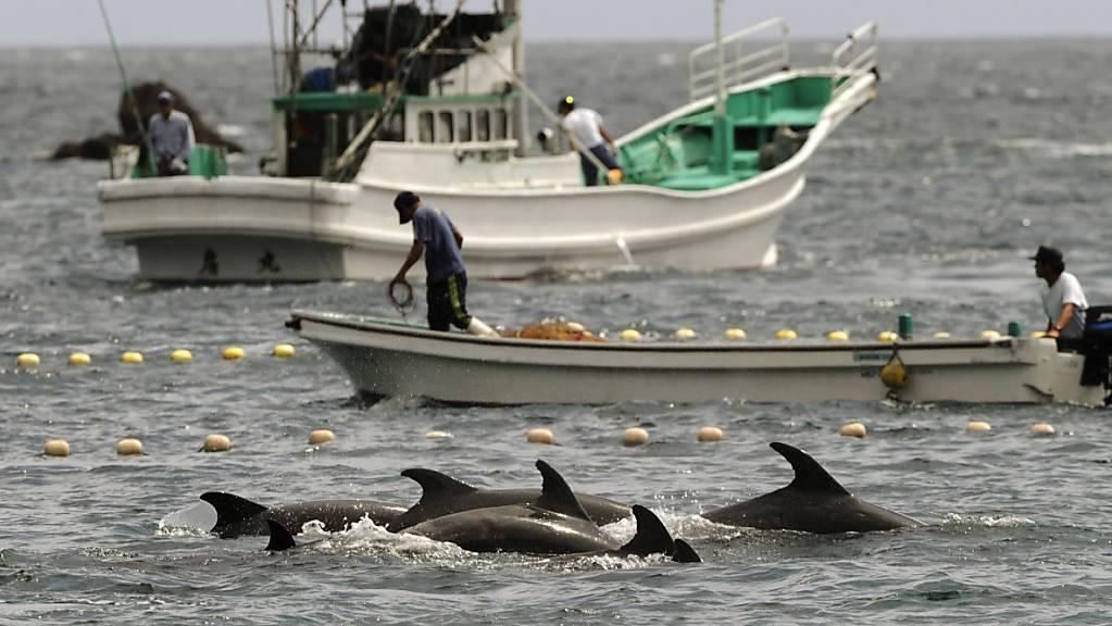 Die Jagd nach Delfinen und deren Tötung sorgt bei Umweltorganisationen und in den Sozialen Medien für einen Aufschrei. (Symbolbild)