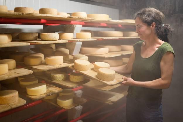 In der Hofkäserei werden verschiedene Sorten Käse produziert