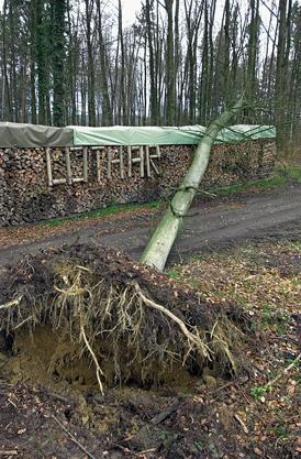 15 Monate nach «Lothar» liegt Fallholz aufgeschichtet am Wegesrand, sinnigerweise mit dem Orkannamen beschriftet. Ein Märzsturm hatte bereits wieder einen Baum gefällt.