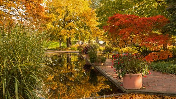 Herbstlaub sollte man nur auf dem Rasen sowie Wegen und Plätzen zusammenrechen.