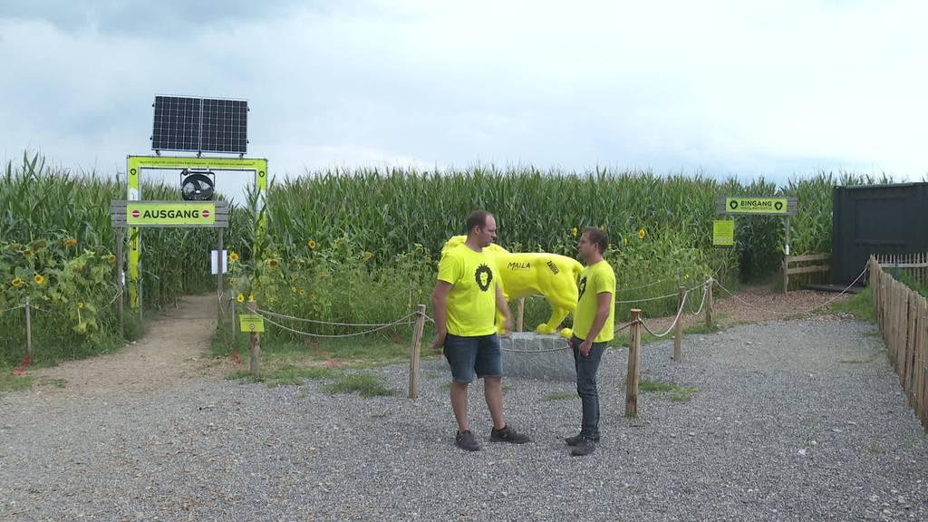 Das Maislabyrinth braucht ein neues Feld und eine neue Leitung