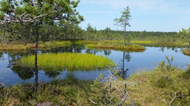 Eines der wichtigsten Waldschutzgebiete Europas: Nationalpark Lahemaa östlich von Tallinn. Foto: Erna Jonsdottir